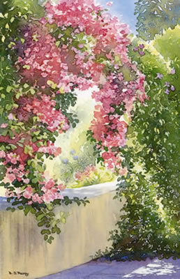 Bougainvillea - watercolour by Dorothy Pavey