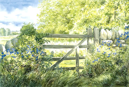 Cotswold Summer - Gate and Meadow Cranesbill - watercolour by Dorothy Pavey