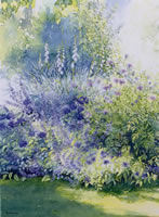 Blue and White - Shady Border - watercolour by Dorothy Pavey