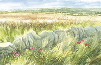 Harvest View - Shipton - watercolour by Dorothy Pavey