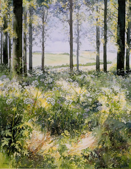 Sunlight and Shade – Woodland Scene - watercolour by Dorothy Pavey