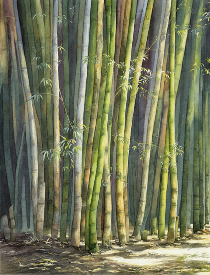 Bamboo - watercolour by Dorothy Pavey