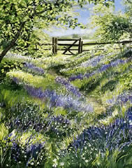 Bluebell Wood - watercolour by Dorothy Pavey
