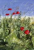 Poppies in the sun - watercolour by Dorothy Pavey