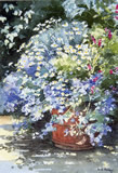 Pot - Blue Mallow. Watercolour by Dorothy Pavey