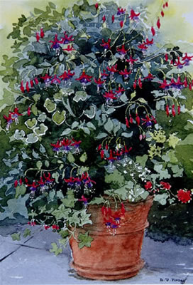 Pot – Fuchsias - watercolour by Dorothy Pavey