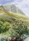 Proteas and Mountains - watercolour by Dorothy Pavey