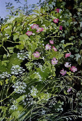 Wild Roses - watercolour by Dorothy Pavey