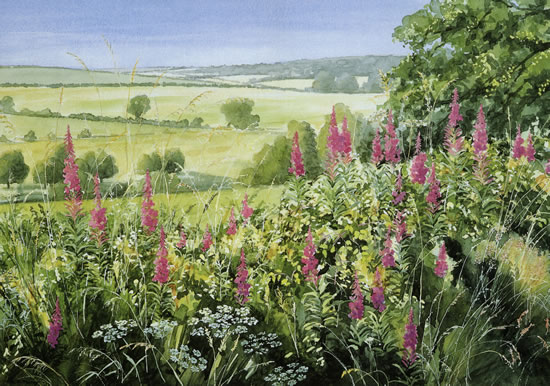 Willowherb/Windrush Valley - watercolour by Dorothy Pavey