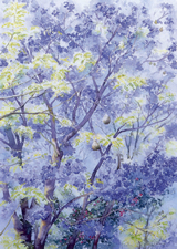 Jacaranda Tree by Dorothy Pavey