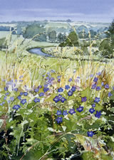 Windrush/Meadow Cranesbill by Dorothy Pavey